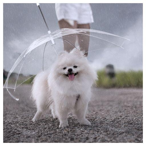 parasol dla psa