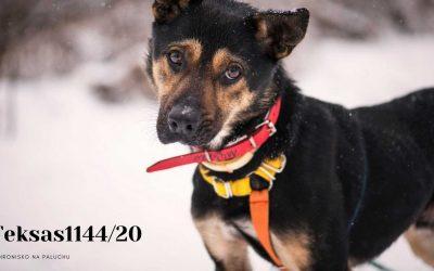 Schronisko dla psa – procedury adopcyjne